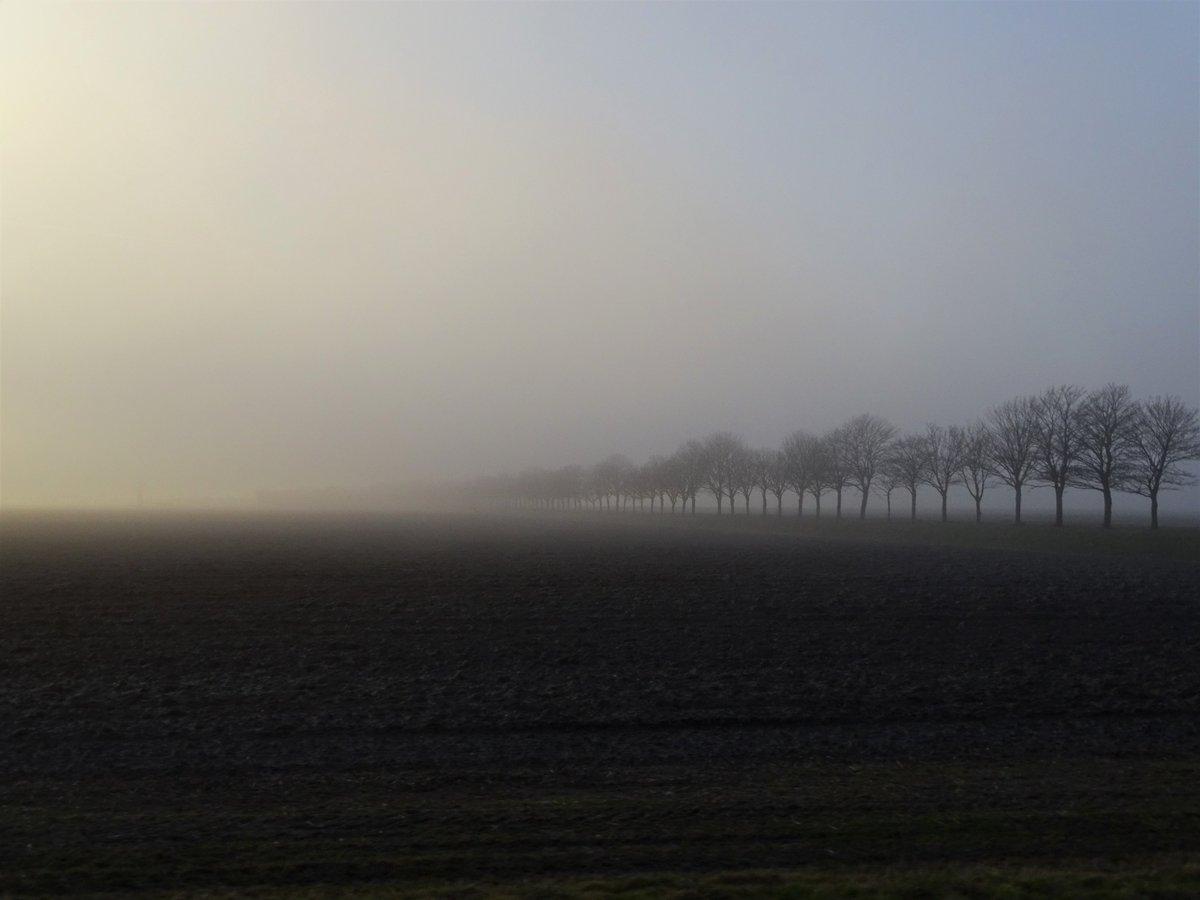 Heel bijzonder het spel tussen de #zon en de #mist vanmiddag in de #KopvanNoordHolland #weer #natuur #nature #landschap #landscape