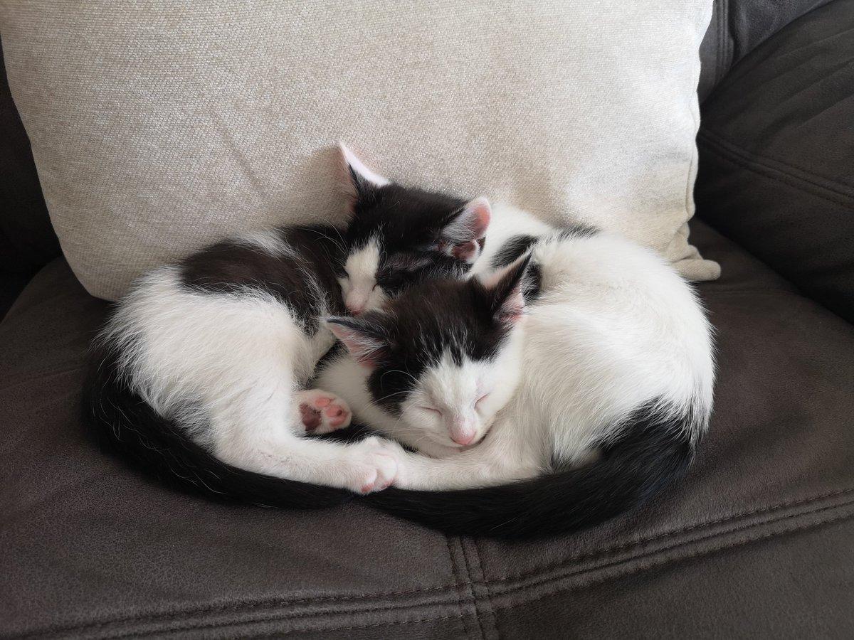 #Caturday #CatsOnTwitter #CatsOfTwitter 😻