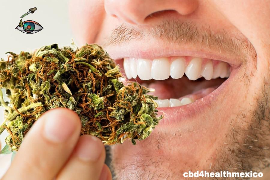 """#PokemonDay 👉 El receptor CB1 te hace feliz 👀 😄 🌿  Aceite de Cannabis medicinal """"Uncanny"""" #Cannaoil Quieres más información da click aqui: 👉  🌱💚🌱"""