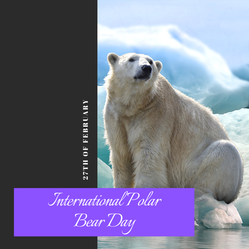 This annual event celebrated every February 27 to raise awareness about the conservation status of the polar bear 🤍 ._._._. #essayswriting #essayswriting_org #students #studentlife #college #university #highschool #holiday #PolarBearDay #FridayThoughts #FridayVibes #FridayWisdom