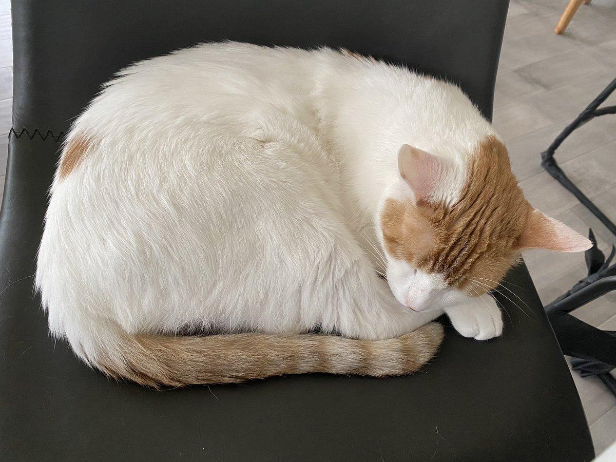 Frankie sleeps all day.  #Caturday