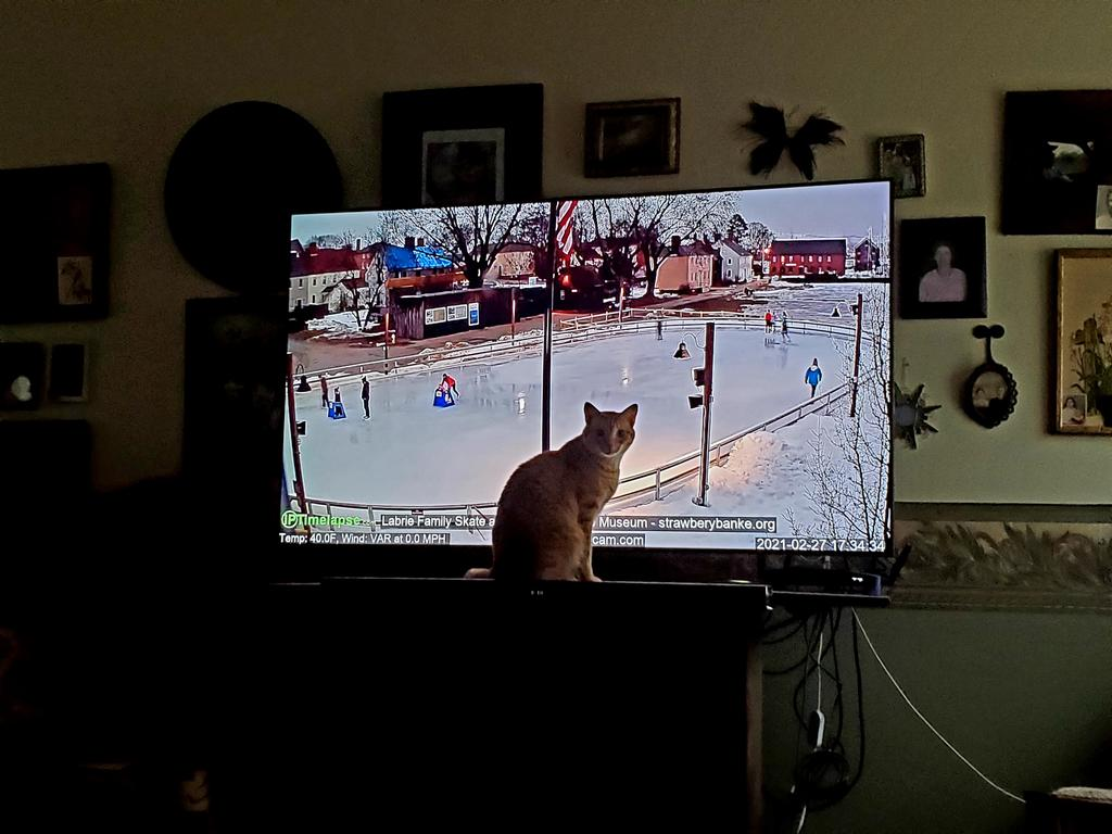 Just a matter of time before he dives through the screen while attempting to skate. Linus. #Caturday