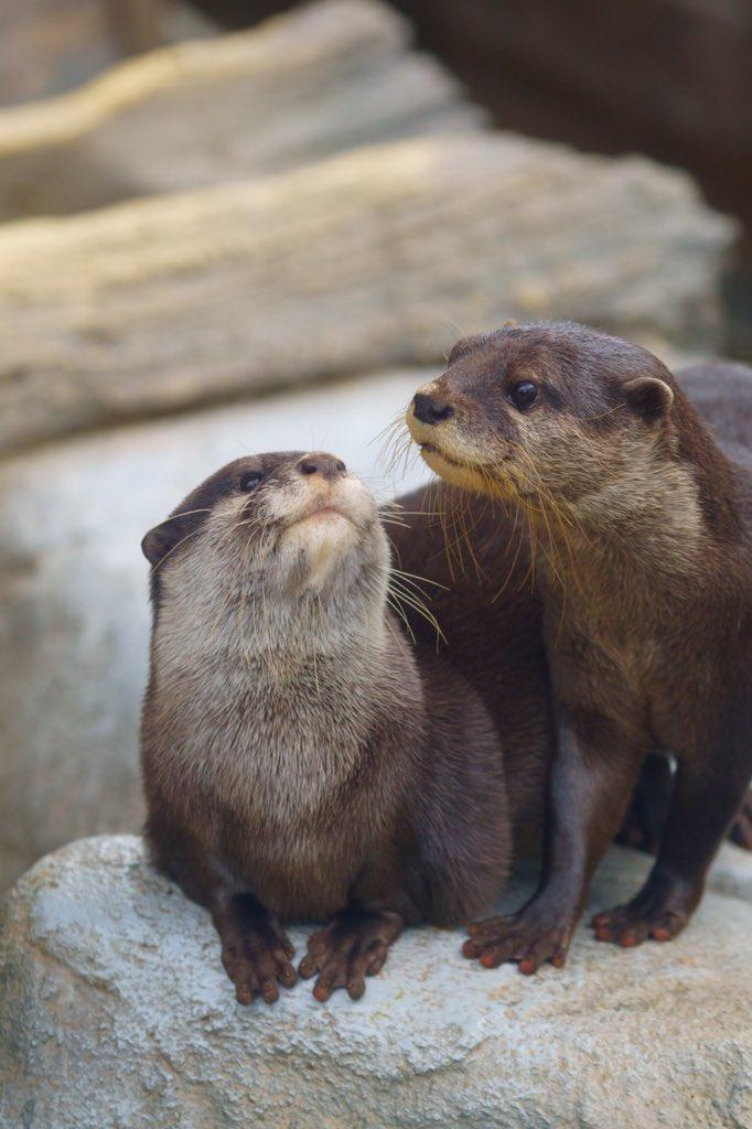 Steve & Brad trying to look intelligent