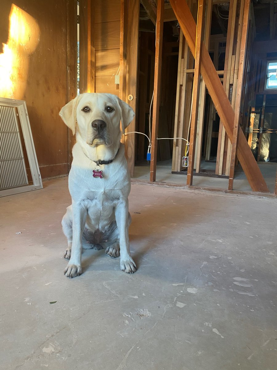 """February 20th is National Love Your Pet Day. Luna is our cutest and """"fur-iendliest"""" team me... #DesignBuild #Construction #Architecture #Design #LunaTheJRPPup #LoveYourPetDay #NationalLoveYourPetDay #Pets #PuppyLove #LoveYourPet #OfficeDog #PupOnTheJob #FamilyBusiness #Labrador"""