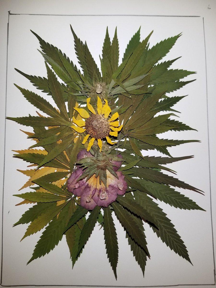 #cyclopse #WIP #2021 #BotanicalMandala #art series #behindthescenes #sneakpeek arrangements of pressed & dried #foliage #floral #design #detritusart #cannabis #connoisseur #culture #ganjagoddess #weedstagram #fineart #1620