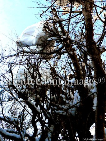 For Sale Photo Prints  Winter  2020/2021 # DSCN1899 Please check out my Facebook page for more photos and ask for prices and sizes if you are interested in buying prints thank you BrigitteGiuntaImages©  #photolovers #photography #decor #nature #color
