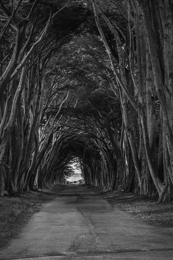 Art for the Soul!  #naturelovers #treelovers #nature #landscapelovers #landscape #photography  #photooftheday #travel