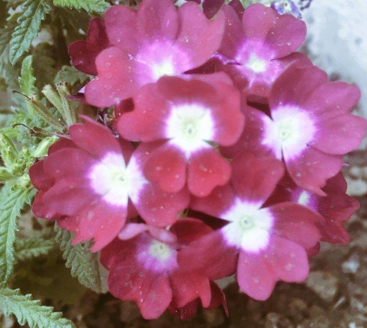#Beautiful #MorningSmile #Flowers