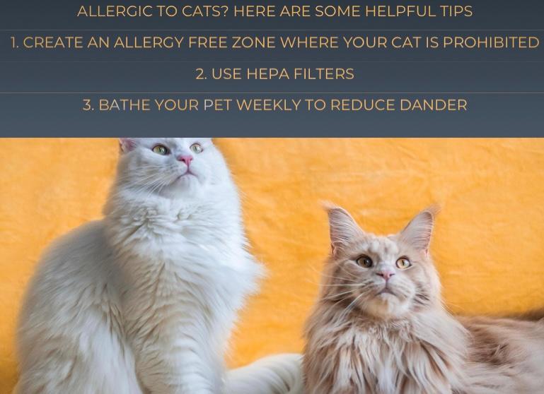 🐈🐈  #abbysanimalsitters #catallergy #cats #cathair #petsitting #sewellnj #washingtontwpnj #gloucestercountynj
