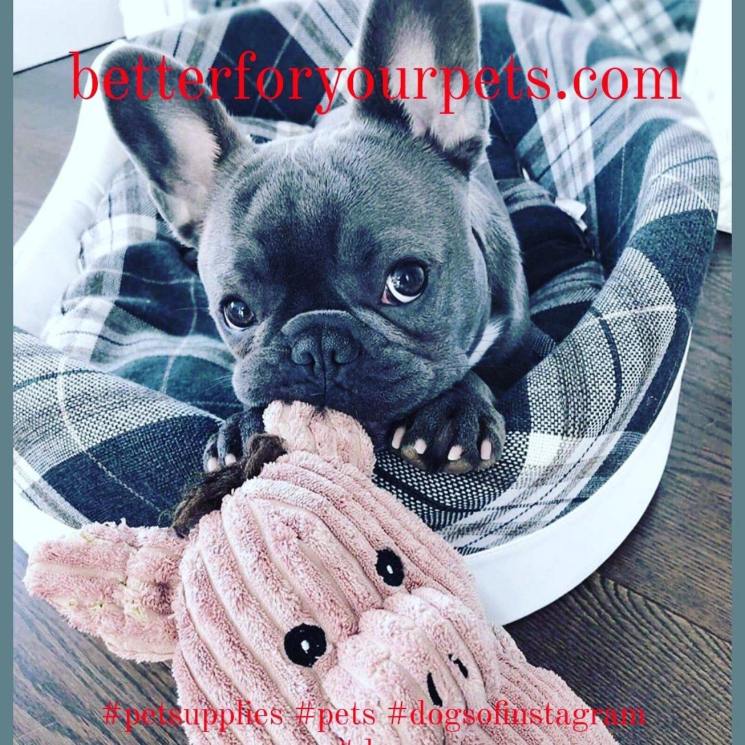 #petsupplies #pets #dogsofinstagram #dogs #petshop #pet #dog #petsofins…