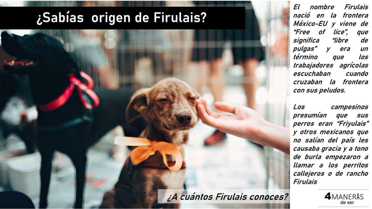 #perro #dog #mexico #dogsofinstagram #pet #dogs #instadog #perros #mascota #puppy #perrosdeinstagram #dogstagram #love #cdmx #doglover #pets #cute #doggy #perrito #photooftheday #picoftheday #petstagram #doglovers #cachorro #instagood #photography #amor #mascotas #4manerasdeser
