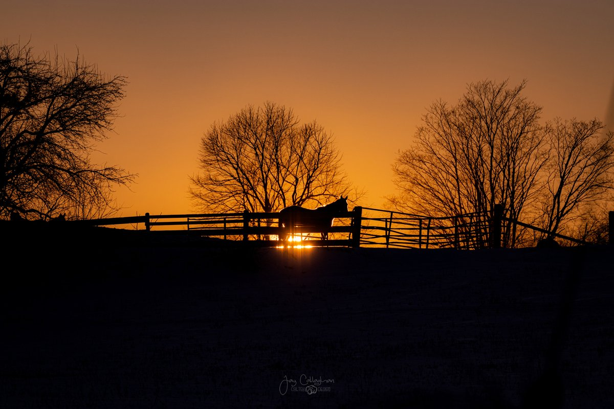 When you are driving and the setting sun just lines up....you need to take a minute to pull over and shoot it.  Shot last night in Peterborough County.  Canon 80D and Sigma 70-200.  @PtboCounty @Ptbo_Canada @CanonCanada @Sigma_Photo  #onthefarm #sunset #silhouettechallenge