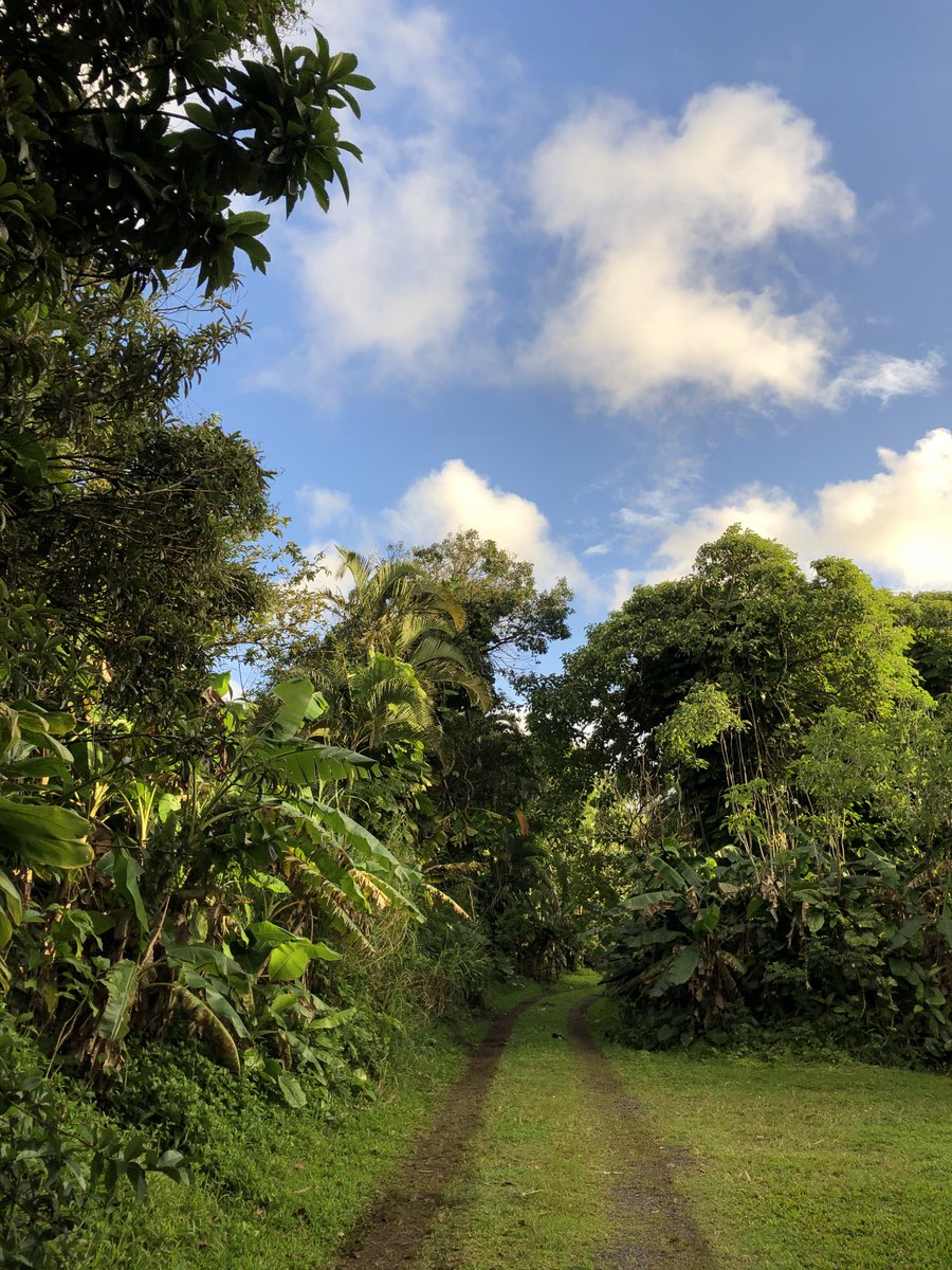 test Twitter Media - Partly cloudy and cooling in haiku. #CMWeather #Maui #Haiku #MagicalMaui #MauiNokaoi https://t.co/9GwyqIEGbZ
