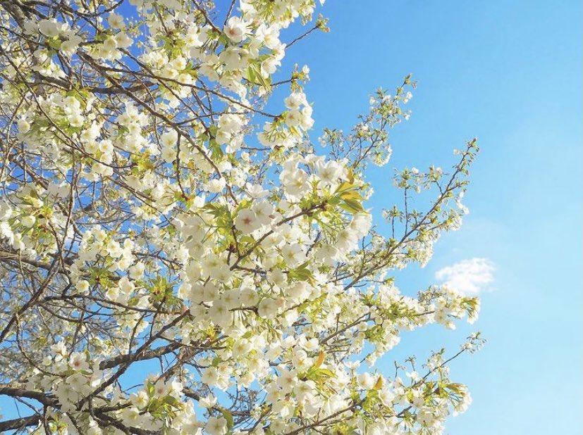 Spring is a good season☁️  #写真好きな人と繋がりたい #写真で伝えたい私の世界  #旅行好きな人と繋がりたい  #写真初心者  #写真評価します  #TravisJapan #travelphotography  #landscapephotography #photography #sky #PictureLifeTogether #PhotographyIsLife  #likeforlike #like4like #happy