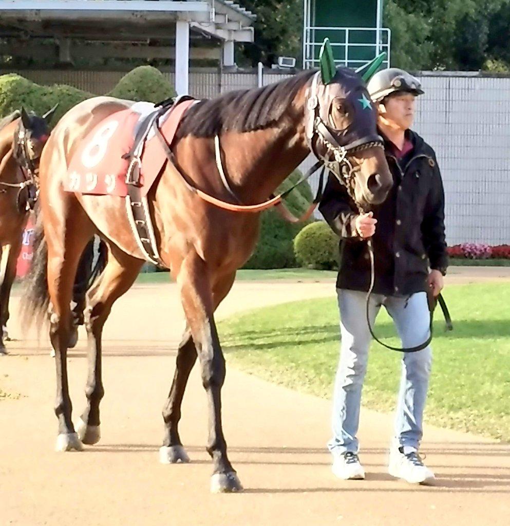【阪急杯】重賞2勝馬カツジが武豊騎手との初コンビで参戦。武豊騎手は同馬の父ディープインパクト、母メリッサ。そして母の父ホワイトマズル(94年🇫🇷凱旋門賞)にも騎乗した経験を持ちますが1989年のホリノライデン、2018年のダイアナヘイローに続く同レース3勝目を狙います。 #阪急杯 #カツジ #武豊