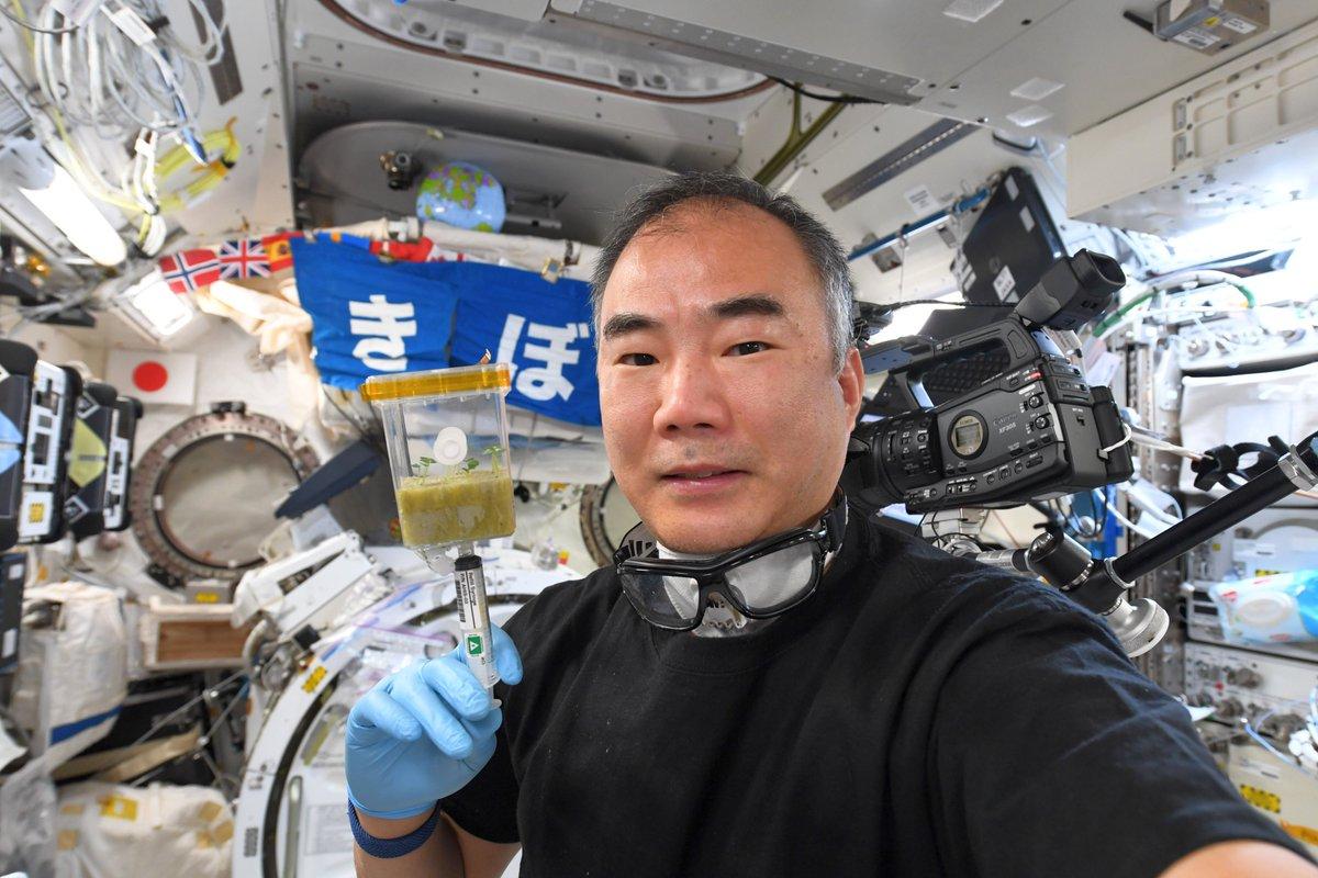 #きょうのバジル おみずはこうやって注射器で少しずつあげるんだ。 ※大人の皆さんへ。チャンバー1は内部にカビが発生したため、宇宙船環境保護のため密封しました。今日からチャンバー2の観察です。 #Spacebasil Day12