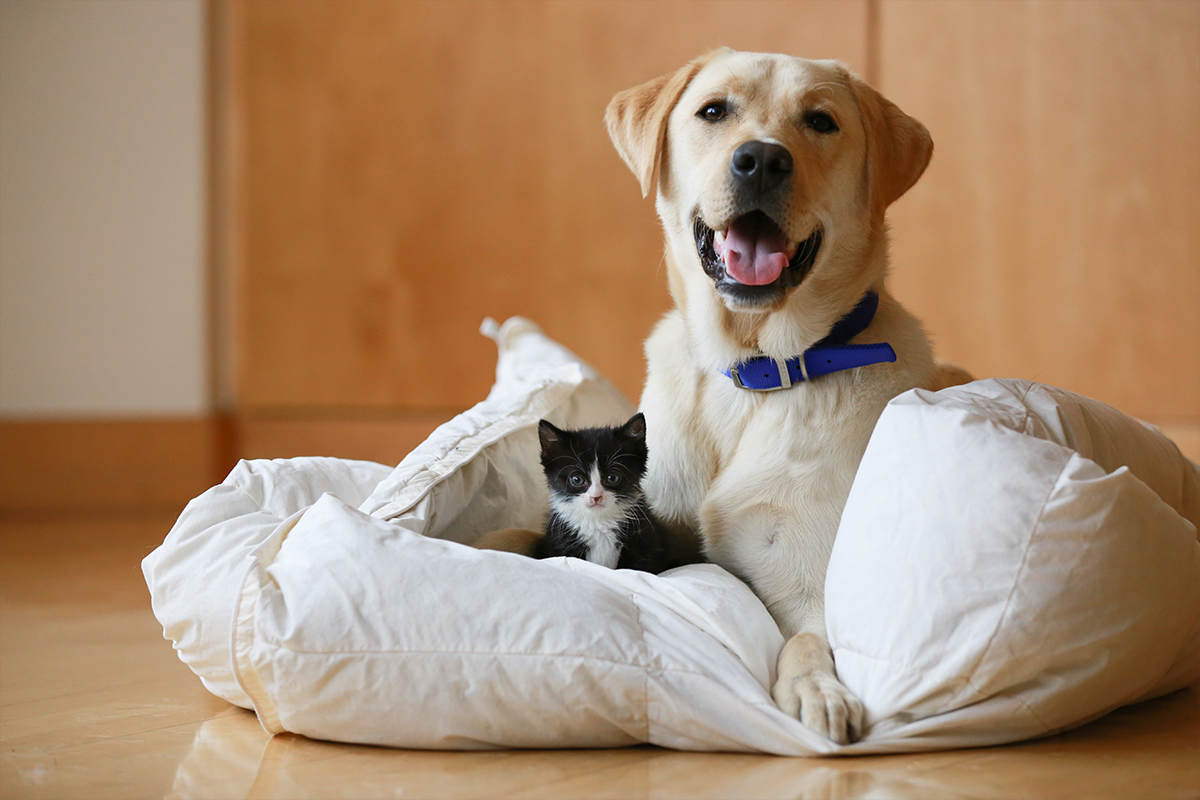 Despite what the movies tell us, dogs and cats can live together in harmony! 🎥💕 However, this all comes down to the way you introduce them. The first meeting should be when both are relaxed, and you should always keep your dog on a slack lead.