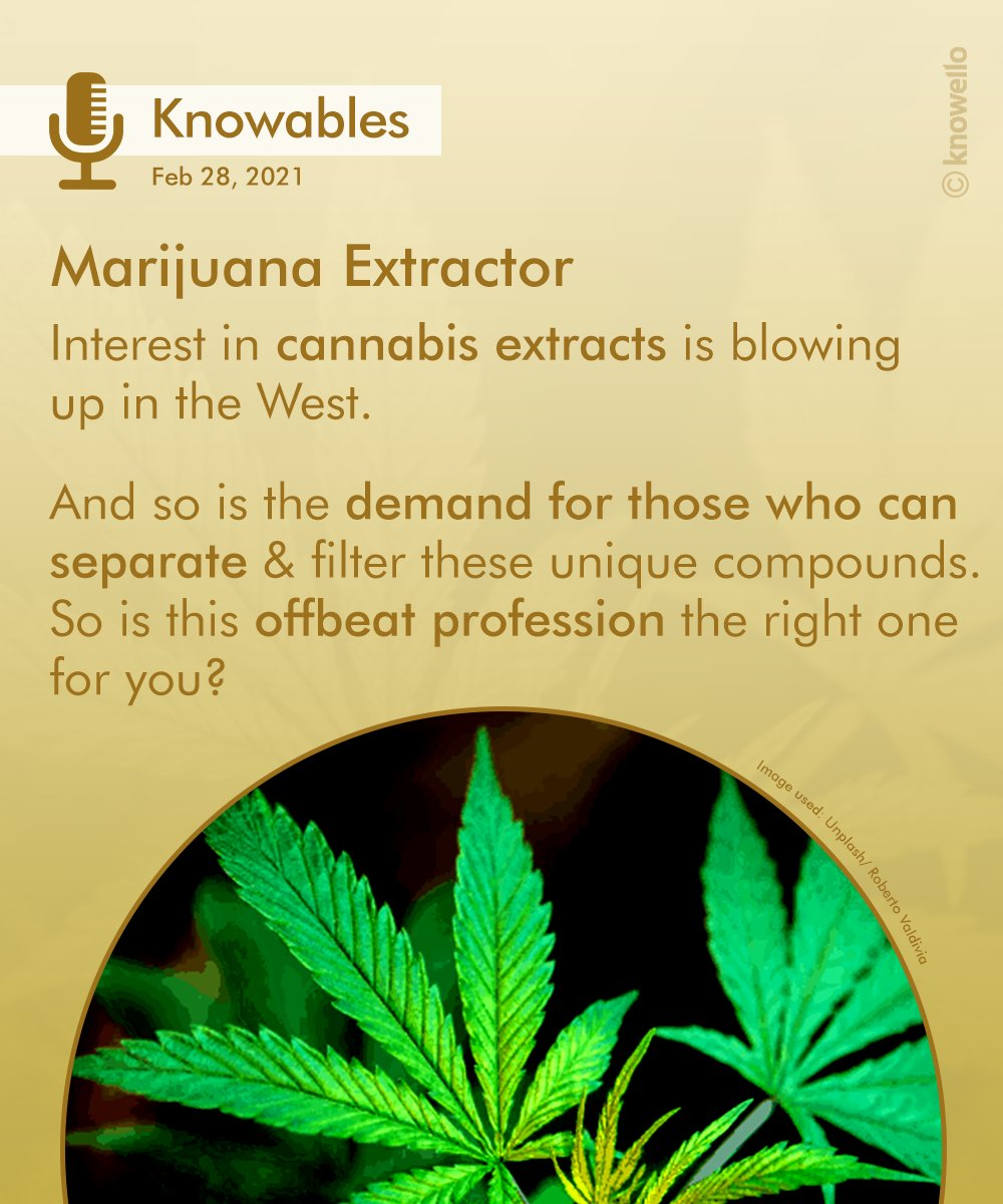 With the cannabis market making global inroads, this new age profession could be a viable career option for budding enthusiasts.   #cannabis #jobs #career #canada #usa #extractor #marijuana #hemp #medicine #industry #Business #Knowello