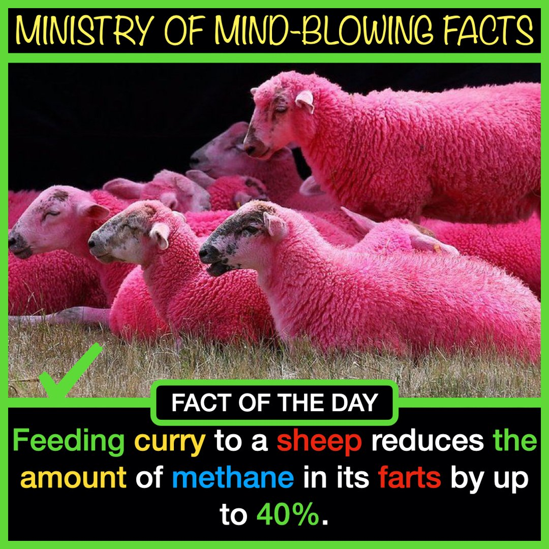 Feeding curry to a sheep reduces the amount of methane in its farts by up to 40%. #science #nature #people #Earth #World #Facts #FactsMatter #FactCheck #factsarefacts #interesting #sheep #sheeps #Pink #stripes #pets #Europe #USA #Canada