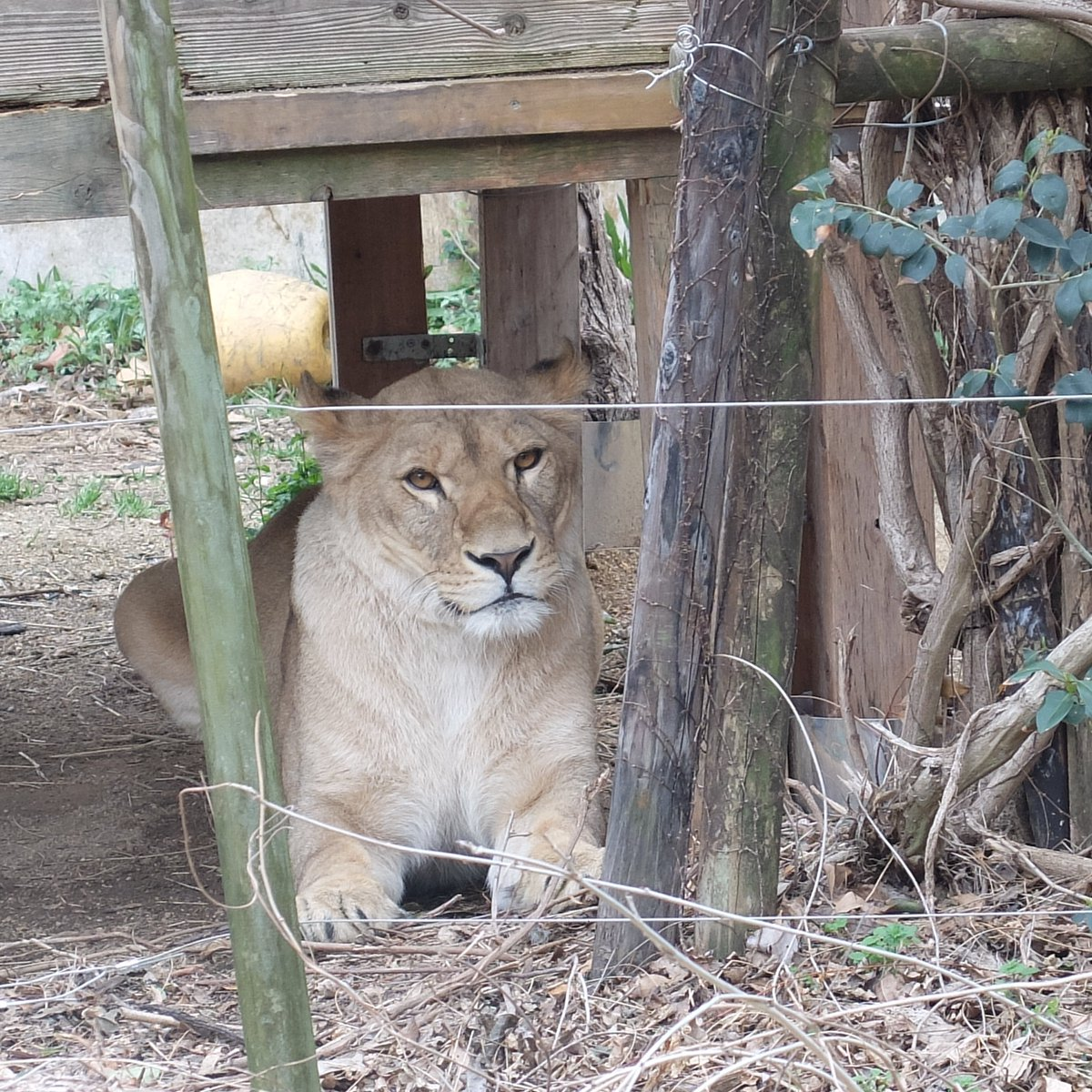 動物 公園 安佐