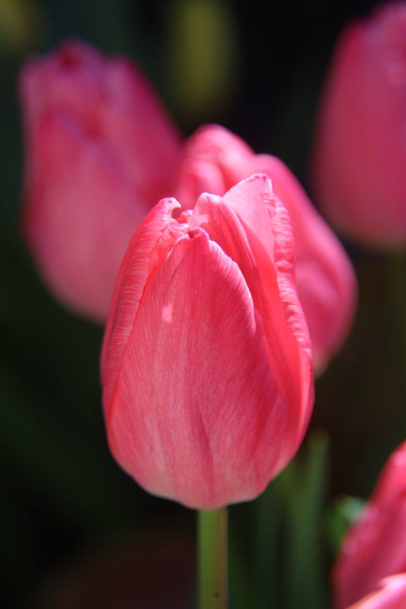 Good morning,friends. Did you sleep well? 😇  Mon 6:15AM 🇯🇵 Tulip 🌸