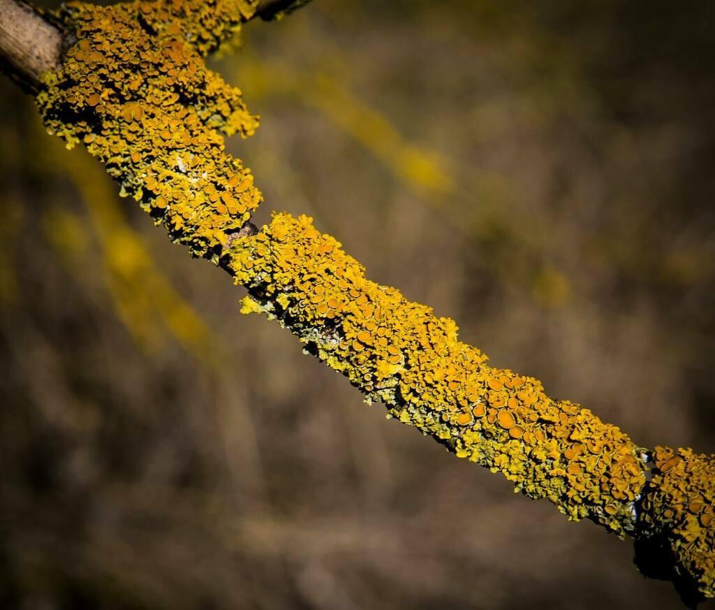 Faág/Tree branch  #naturephotography #nature #photography #photooftheday #naturelovers #travel #photo #landscape #travelphotography #picoftheday #photographer #landscapephotography #wildlife #art #naturelover  #photoshoot #instadaily #tree #dailyphoto #photobyme#fotozas#ca…