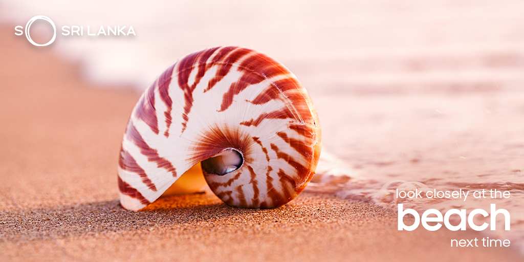 The next time you are at the beach look closely at the sand and see how many kinds of shells you can spot  #SeaShells #WildlifeInSriLanka #SriLanka #SoSriLanka #ExploreSriLanka