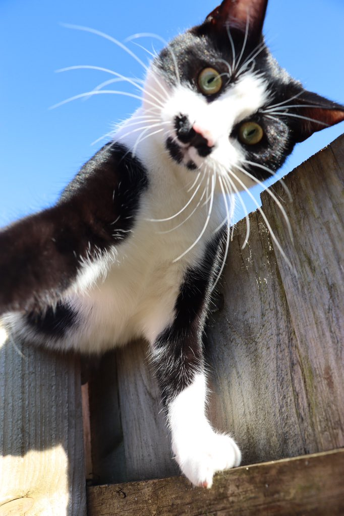 Happy Sunday.  We might be having a busy day sorting at home, but we'd be silly to not get out and enjoy the sunshine too with Teddy.  #sundayvibes #springsun #HappySunday #cat #happycat #outside