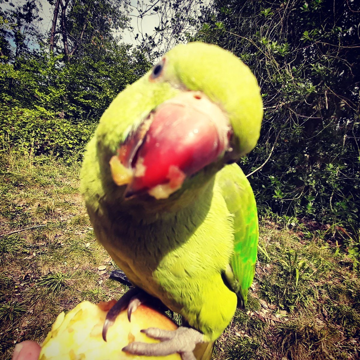 Those feathered friends @BBCCountryfile are jolly inquisitive!!   #countryfile #parakeets