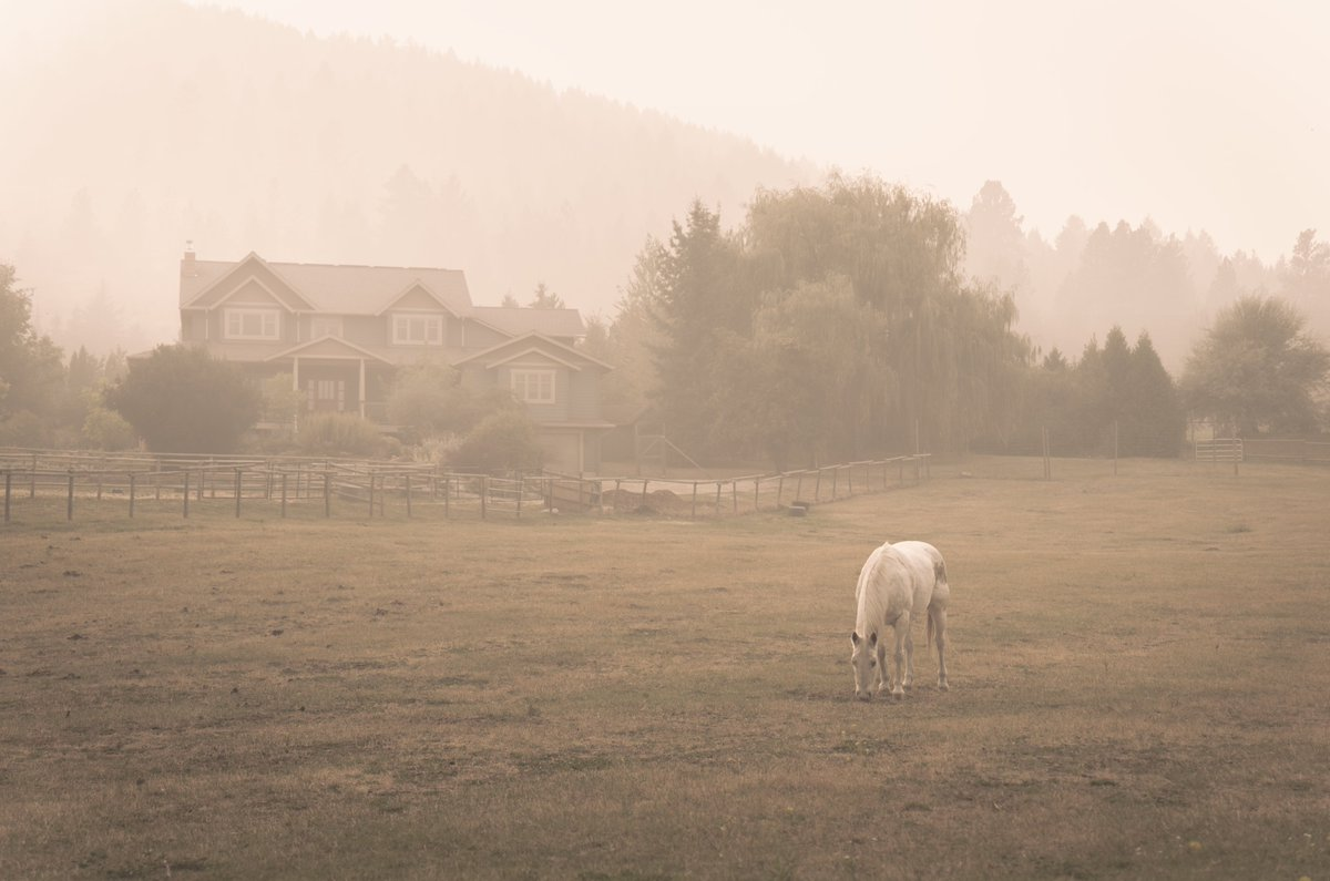 quiet moments captured during the 2020 forest fires