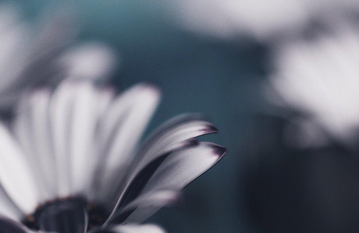 また買ってしまた😱😱  #photo #photography #キリトリセカイ #ファインダー越しの私の世界 🌼花🌼