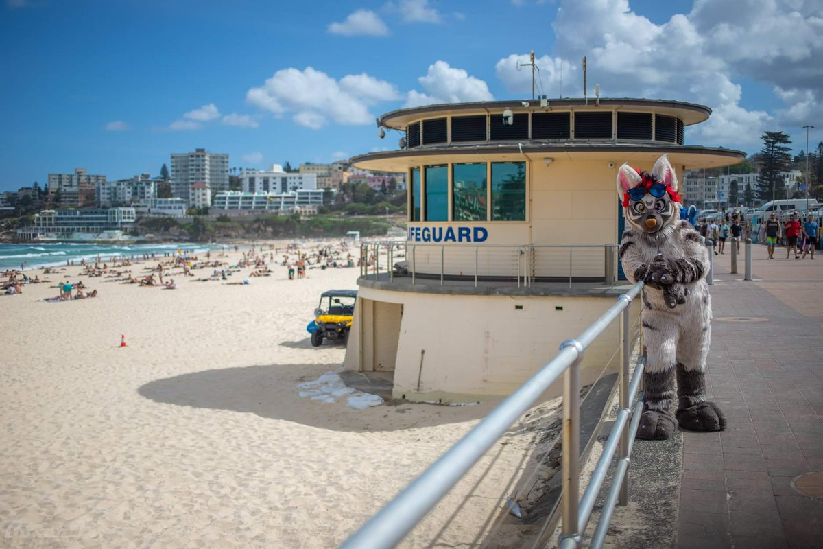 Dropped in to visit the Bondi Rescue tower during a Sydney trip 😍🌊  📸 @Boxer_Fox  #fursuit #furry #fursuitfriday