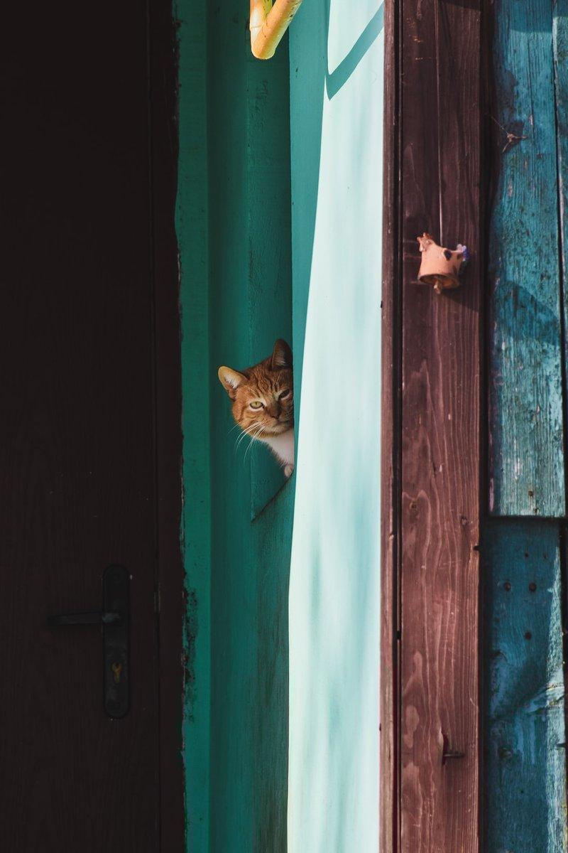 credits to Artem Makarov at  #cat #cats #cattwitter #gato #gatos #cute