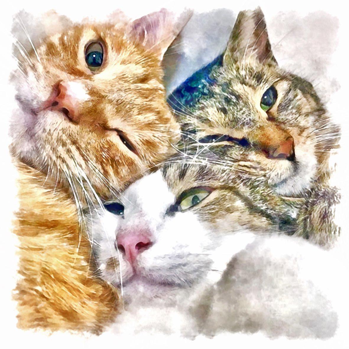 🐱 #picture #絵 #発見 #アート #イラスト #ギャラリー #猫 #cats #猫好き #にゃんすたぐらむ #猫イラスト #猫写真 #保護猫 #猫好きさんと繋がりたい #猫好きな人と繋がりたい #仔猫 #子猫