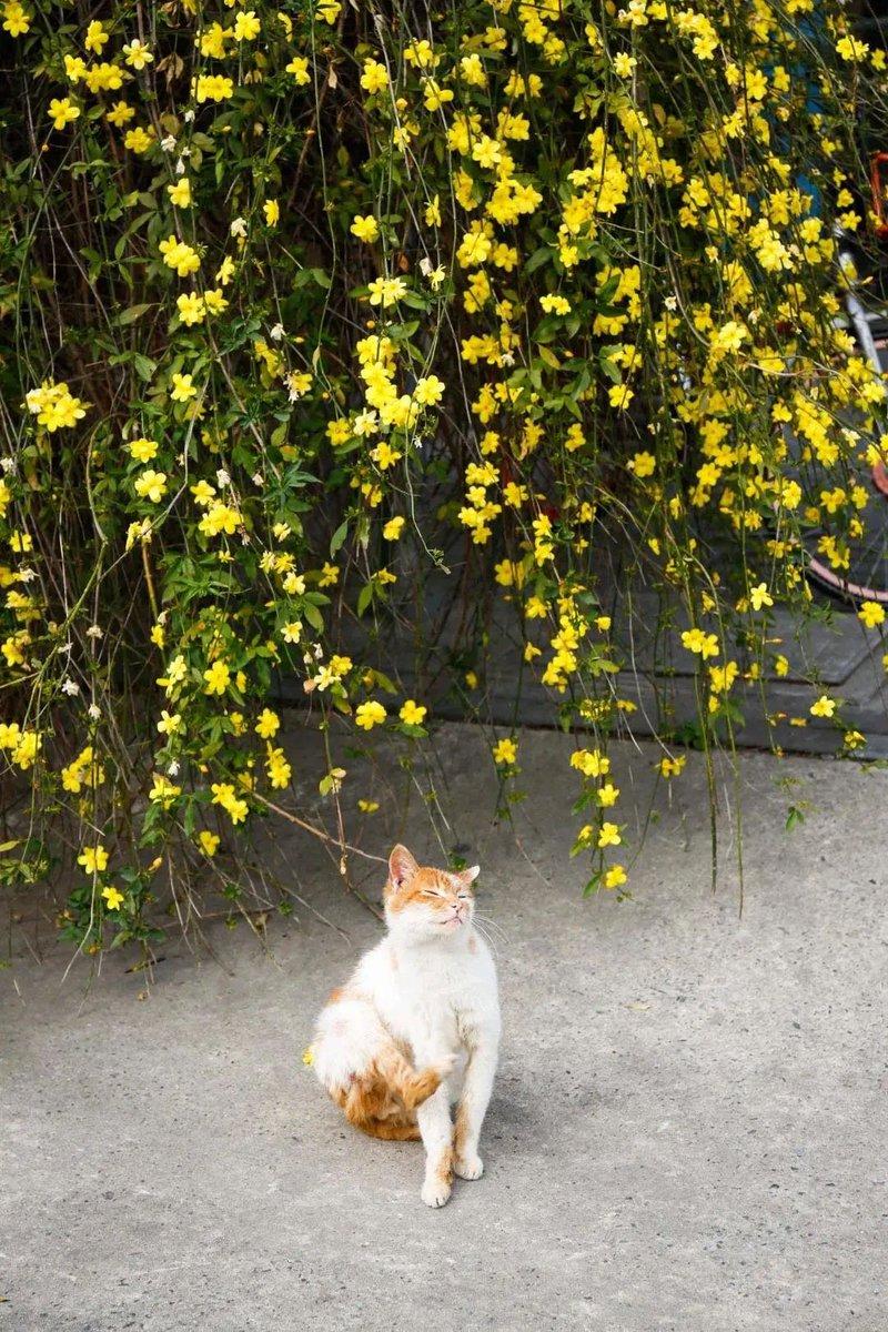 野良猫♪ 今日から三月ですね🌱💘 春だね〜😽😽  #cat #cats #CatsOfTwitter #猫好きさんと繋がりたい #猫のいる生活 #SpringIsComing #spring