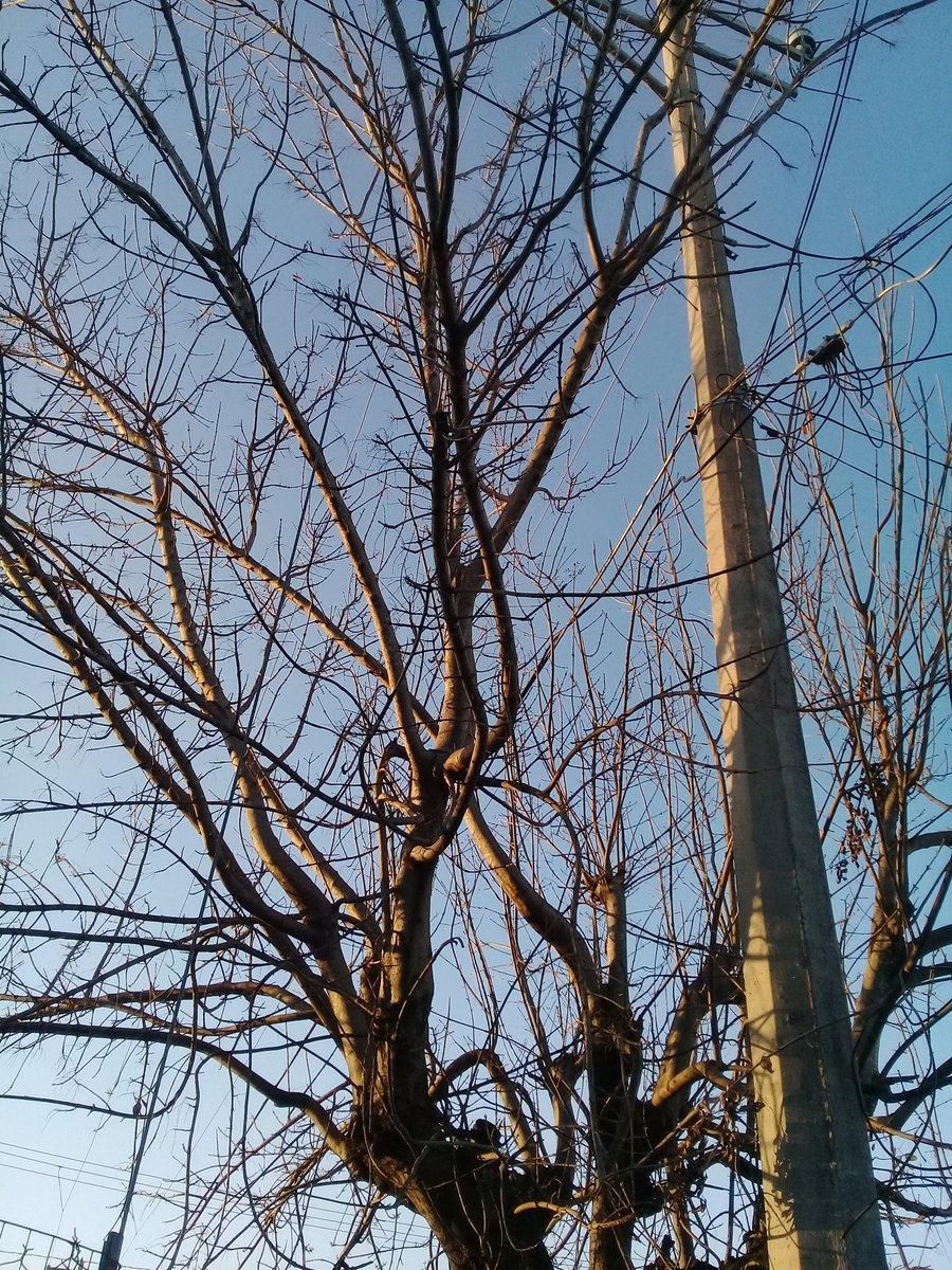 Dry Tree 🌿✨ #edicion #photoshop #photography #drytree #blue #yellow #iluminacion #contraste