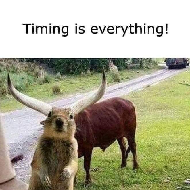 A Texas Longhorn ... Squirrel?!!🐿