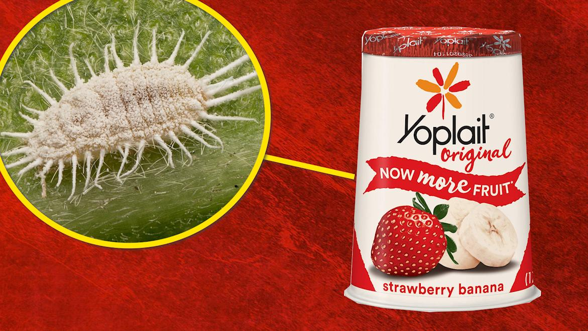 Replying to @TechInsider: Bugs are what give strawberry Yoplait Yogurt its red color