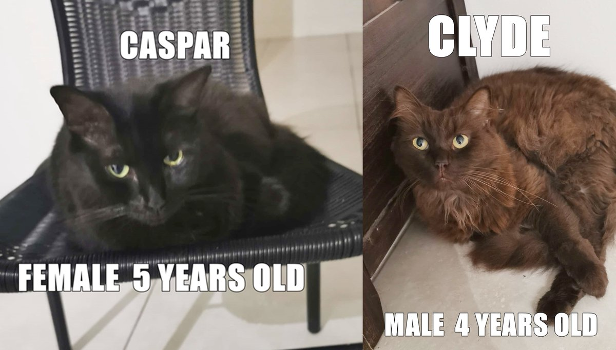 #TOWNSVILLE  A home is desperately needed for this bonded pair of cats. Caspar and Clyde are desexed and love a good cuddle. If you can provide a loving home for them both, please contact haydentscott@gmail.com #Cats