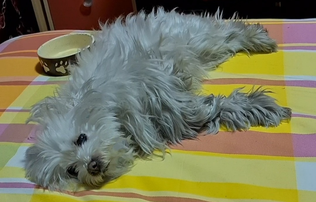 Buongiorno e buon inizio settimana #follow4follow #like4like #animal #dog #photo #video #aforismi #selfie #umbria #libri #cute #natura #follower #hobby #bijoux #friends  #nativeamerican #followback #amazing #bestoftheday  #picoftheday #me #twittamibeautiful #MondayMorning