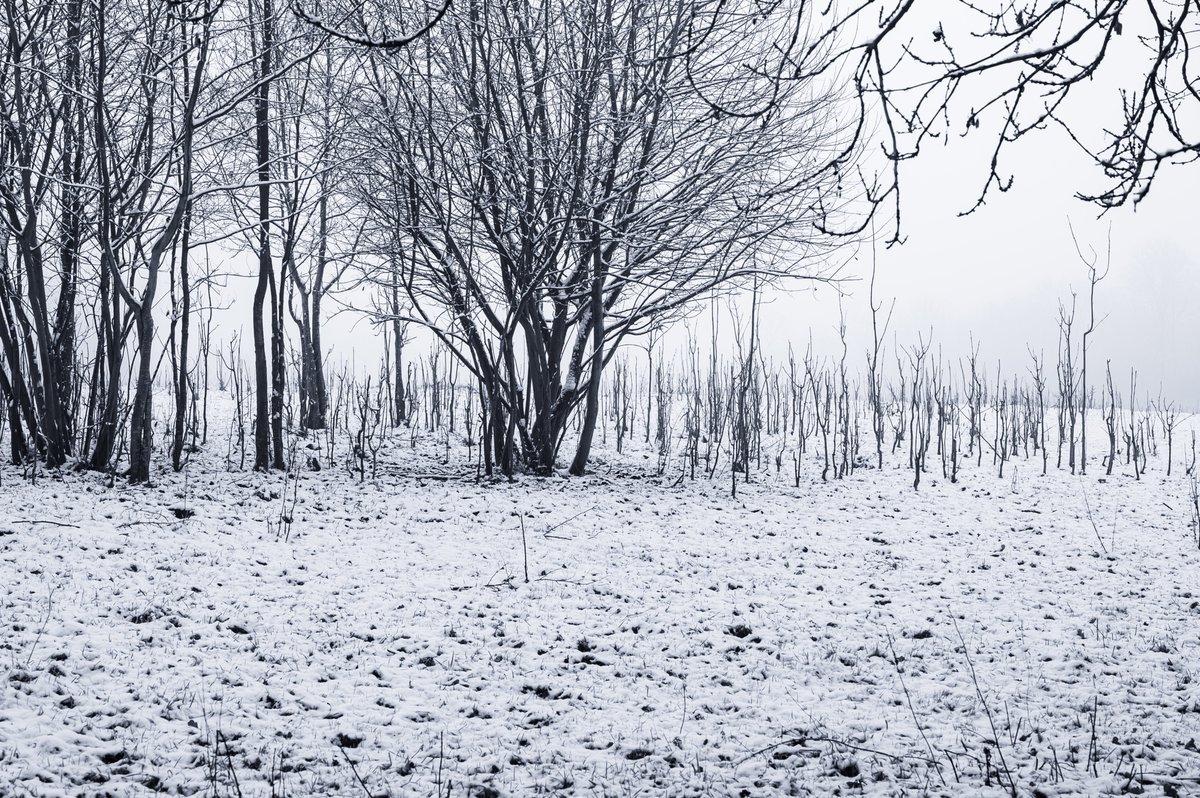 Beesley Green  ❄️🥶🌿🍁🍂 #snow #trees #winter #beesley #roegreen #snowing #woods #field #branches #worsley #openspace #snowscene #nikon #z6 24-70f4 #weather #snowcovered #nature #flora #ice #snowflakes @SalfordLeisure @VisitSalford @CityofTreesMcr @SalfordWildlife @WorsleyInfo