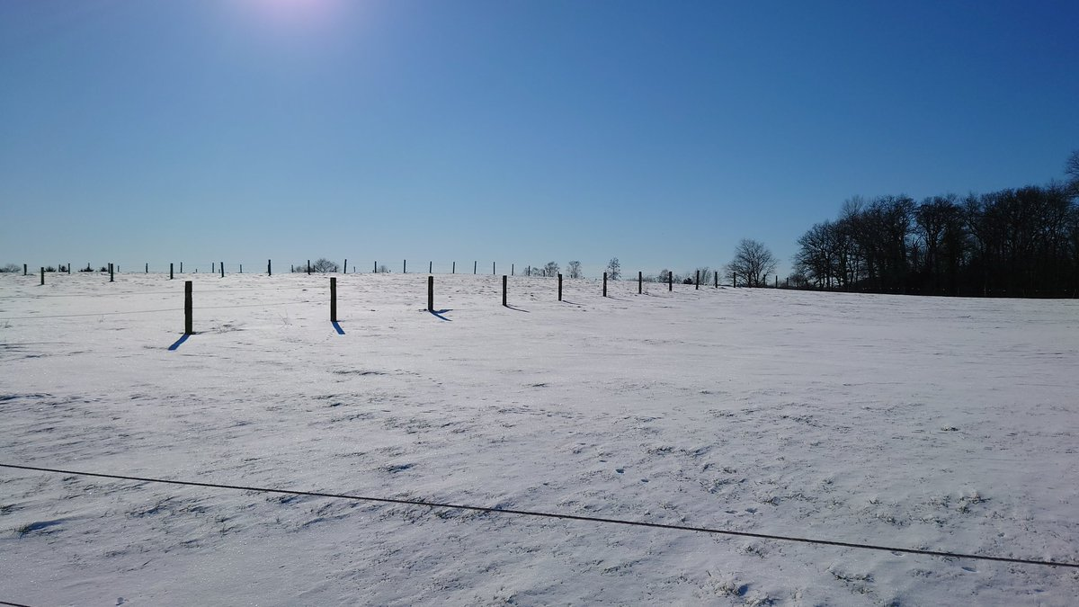 Have a nice week everyone!  #goodmorningtwitterworld #goodmorning  #landscapephotography #tuesdaymotivations #blue #nature #forest #snowday #snow #pine #naturephotography #winter