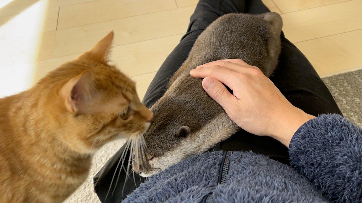 猫が頭上を飛び回った時のカワウソの反応は…?