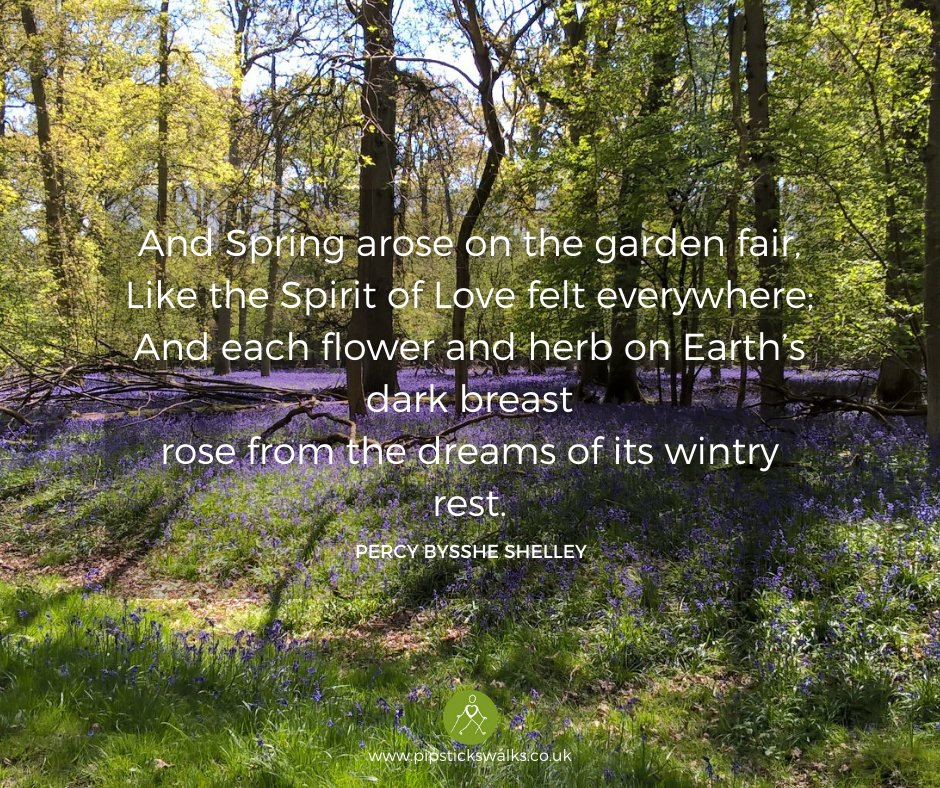 Welcome to Spring (in the meteorological sense)! Although we must wait a little longer for the sweet aroma of the bluebells. 😉 #spring #bluebells #shelley #getoutside #nature
