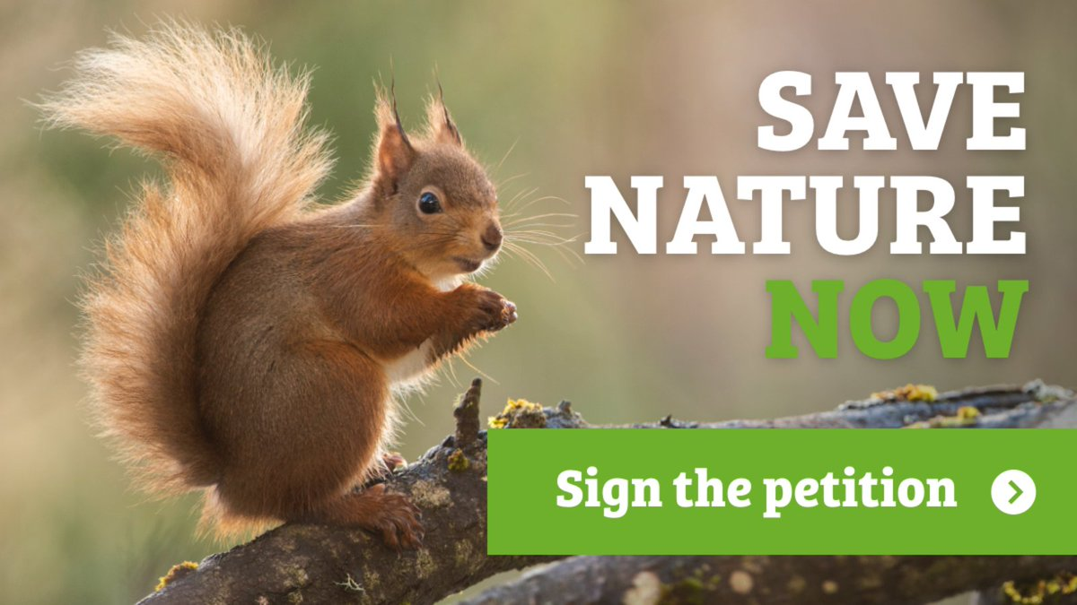 #Nature is in trouble:  🦔1 in 4 GB mammals face extinction  🐝Half of species are in long-term decline  💧0% of rivers are in good health  We need a #StateofNature target in law to guarantee action! Let's help nature NOW by signing the petition 👉