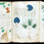Image for the Tweet beginning: #alchimie #astrologie #biologie #cosmologie  MANUSCRIT VOYNICH