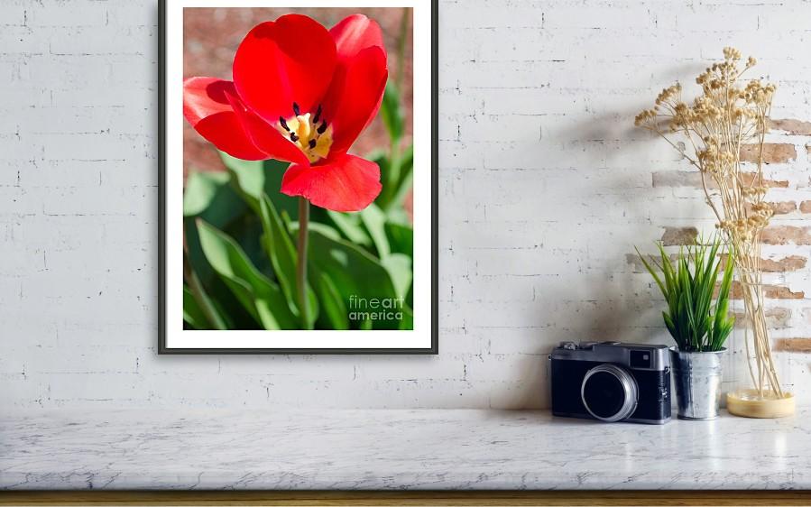 Art Sale SHOP HERE:  #spring #springdecor #easter #holidays #artsale #sale #fineart #homedecor #dormdecor #wallart #typography #inspirational #minimalism #onlineshopping #buyart #artforsale #quotes #minimalist #StPatricksDay2021