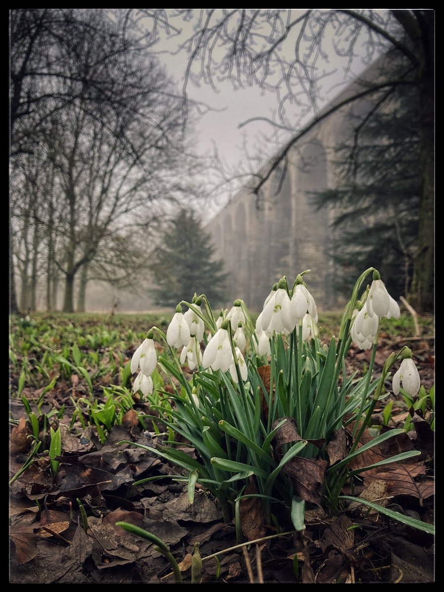 A murky but still day for a walk around our market town. Snowdrops looking great & birds in full song #penistone #yorkshire #MondayMotivation #Mondayvibes