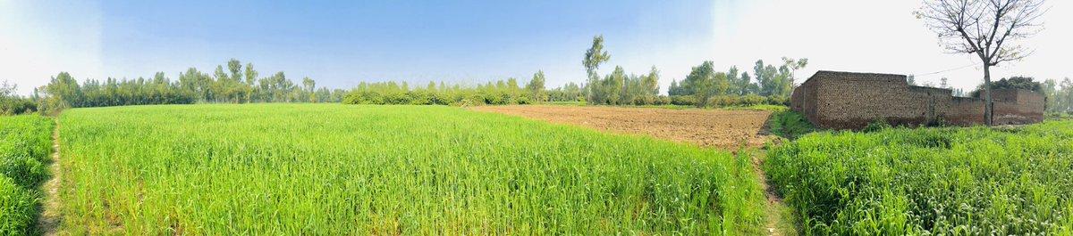 #followme #barmusa #shoaib_riaz #photooftheday #instagood #nofilter #tbt #igers #picoftheday #instagram #orange #love #instapic #instadaily #mandibahadduin  #instamood #followme #likeforlike #like4like #follow4follow #followforfollow #f4f #field #green #farmar #villagelife