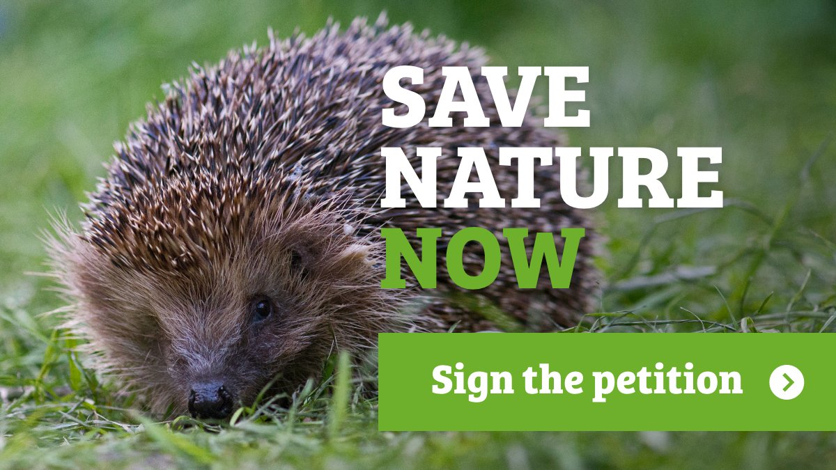 #Nature is in trouble:  🐝 Half of species are in long-term decline.  💧 0% of rivers are in good health.  🦔 1 in 4 GB mammals face extinction.  We need a #StateofNature target in law to guarantee action. Please sign the petition to call for change! 👇